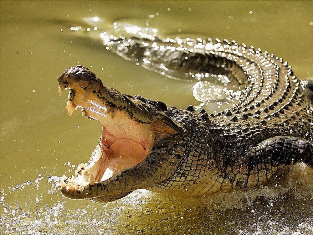 Дядя сгинул в пасти крокодила на глазах у племянника