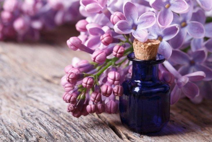 Лекарственные растения: не пропустите пик цветения сирени