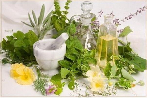 Растения, которые очистят организм от паразитов