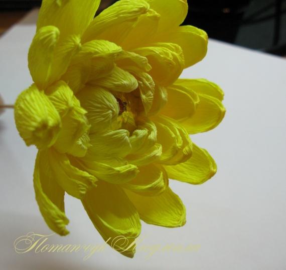 Хризантемы из конфет своими руками мастер класс
