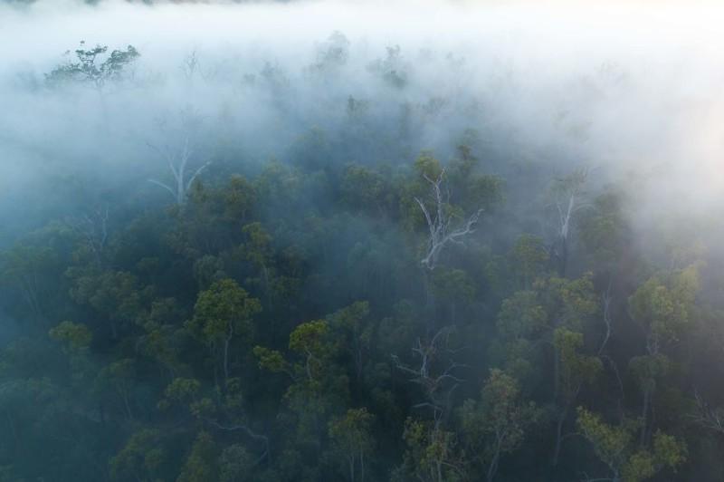 Утренний туман австралия, где зимой рай, зима, красота, мягкий климат, пейзажи, тепло, фото
