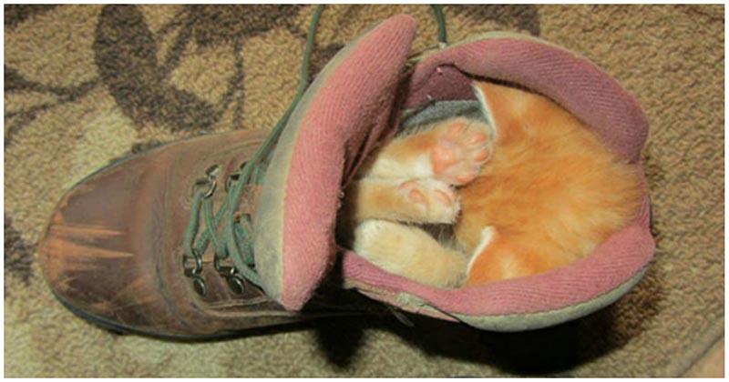 Уморительные фотографии животных, которые могут заснуть где угодно