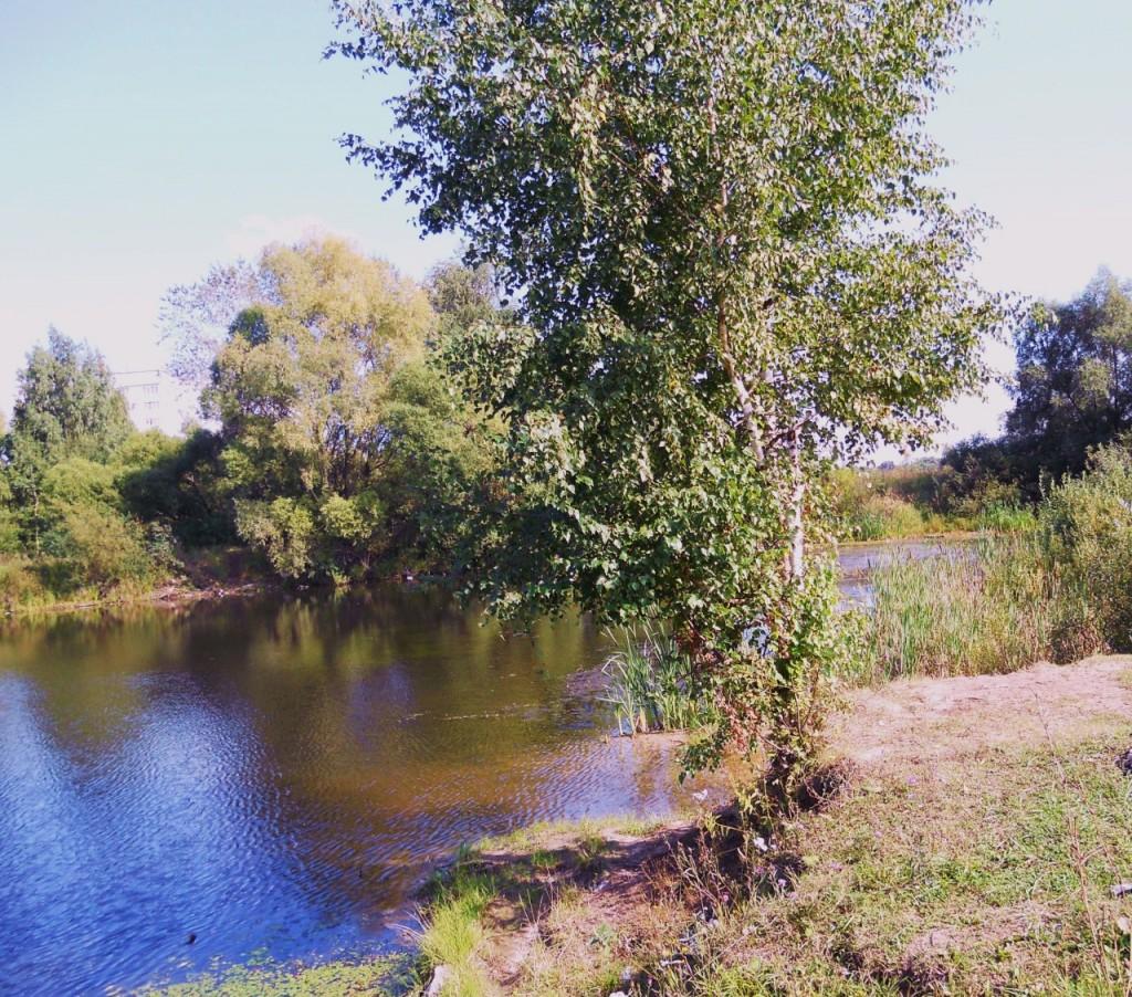 Одинокая берёзка у реки