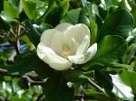 Цветочный гороскоп кельтов: апрель, май