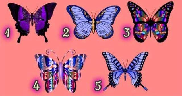 Выберите бабочку и узнайте ч…