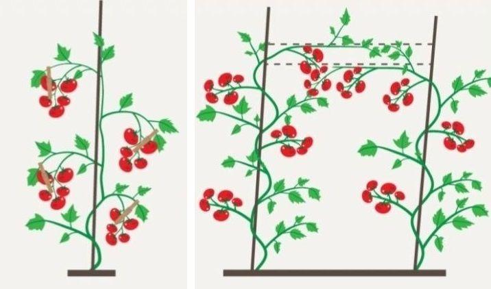 формирование куста высокорослых помидоров
