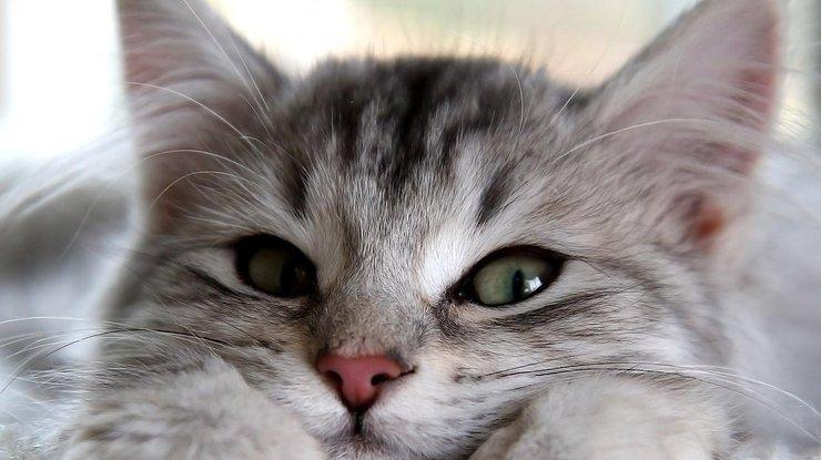 Доказательства того, что кот…