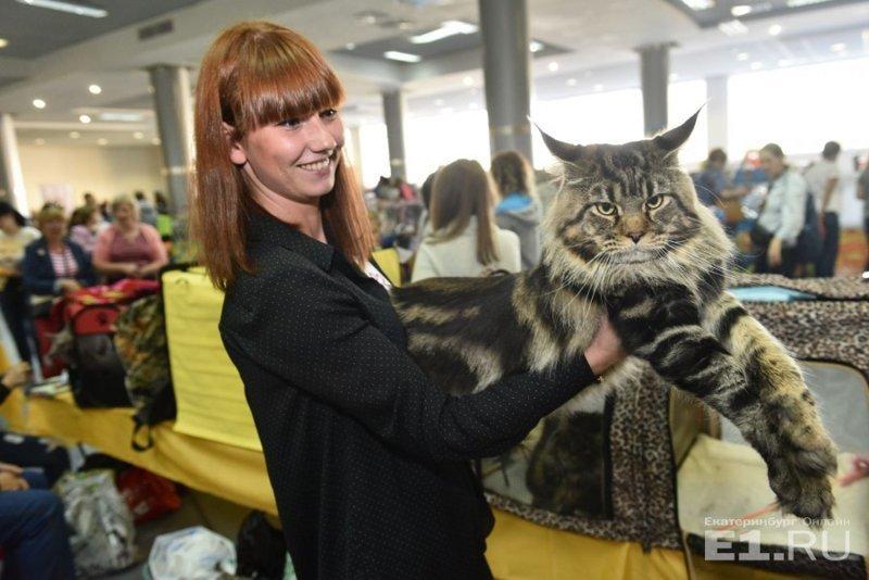 Фоторепортаж с праздничной выставки кошек в Екатеринбурге