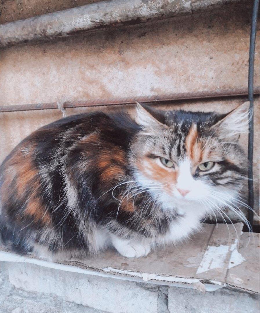 На дворе зима, мороз,невероятная красавица так нуждается в помощи. Не дайте кошечке пропасть...