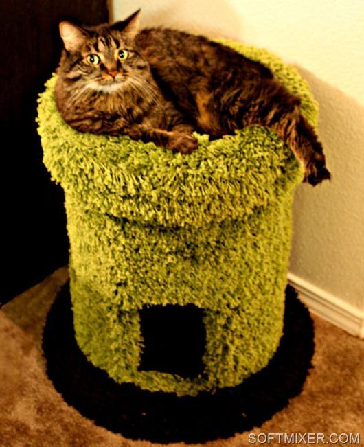 Как сделать домик для котенка из коробки