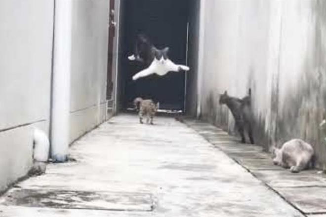 Реакция кошек на землятресение: видео