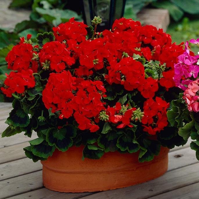 какие цветы должны быть в доме обязательно по народным приметам фото