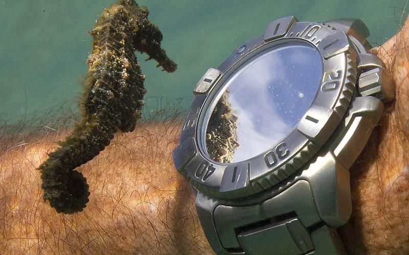 Самая медленная рыба в мире
