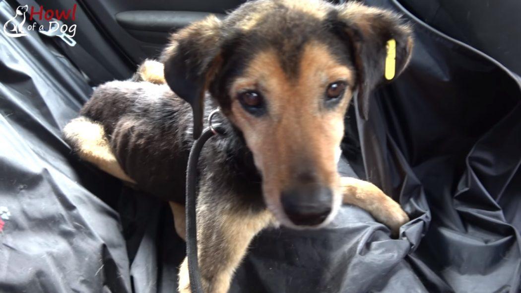 Спасение собаки, ждавшей этого момента долгих 8 лет