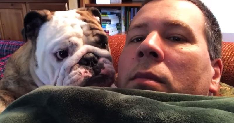 Бульдог всего лишь хотел внимания от хозяина, но тот был равнодушен. Обидку этого пса нужно видеть!