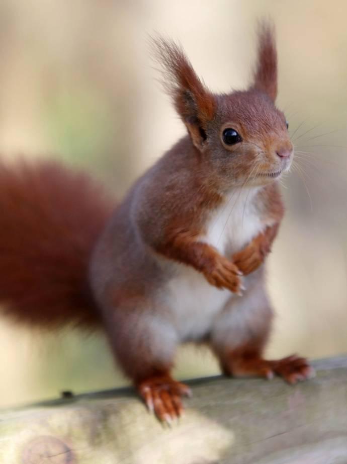 В английском парке завелась особенно наглая белка