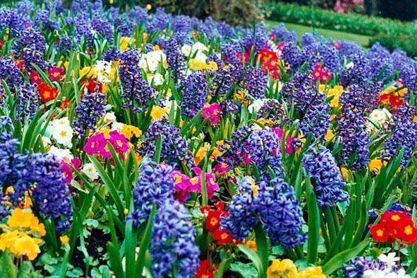Какие цветы можно высаживать уже в апреле
