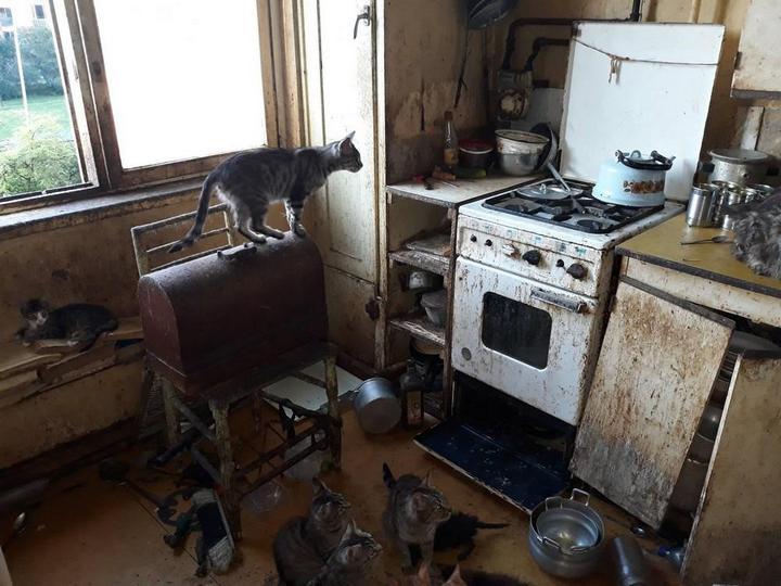 В Риге пенсионерка в квартире держала более 20 кошек