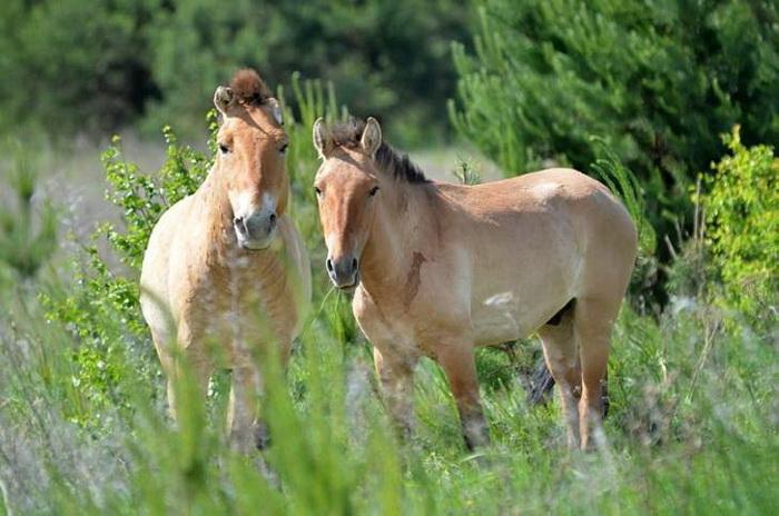 За 30 лет флора и фауна зоны отчуждения начала восстанавливаться.