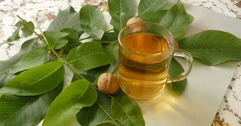Полезные свойства листьев грецкого ореха