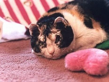 Скарлетт – это не просто кошка. Это мама с...
