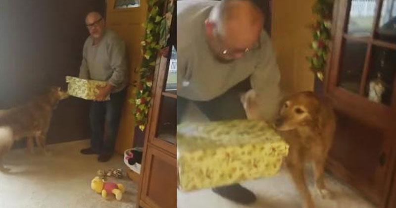 Пес получил на Рождество большую коробку. Когда он заглянул в нее, оказался вне себя от радости!