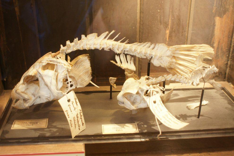 gmoz17 Лондонский музей зоологии и сравнительной анатомии Гранта