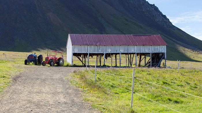 Хаукарль - тухлая акула. Хаукарль, Исландия, Кулинария, Еда, Необычная еда, Акула, Длиннопост