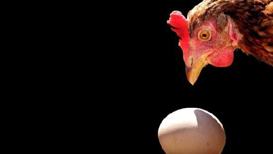 Что было раньше: яйцо или курица? Иммунитет и хронический тонзиллит