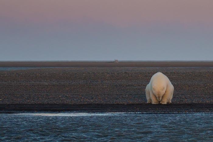 Разочарование Аляской