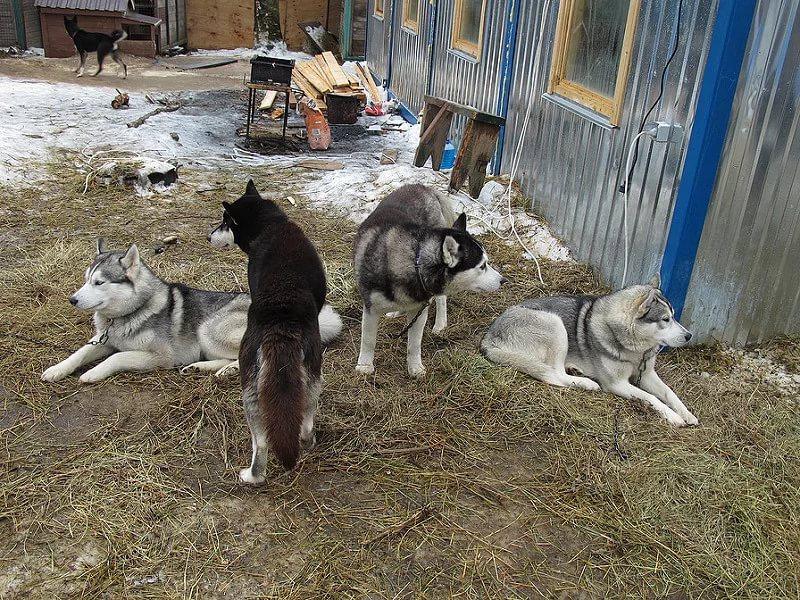 Светка и собаки