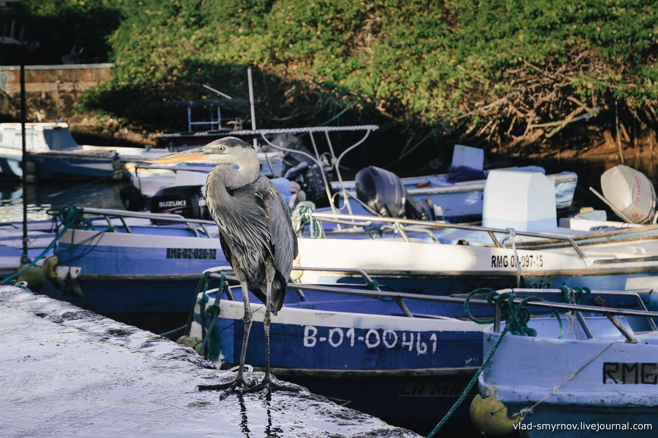 Рыбный рынок