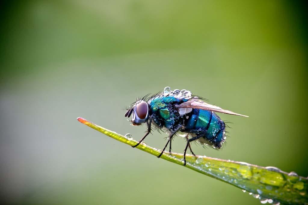 David Chambon 11 «Драгоценные» насекомые Давида Шамбона