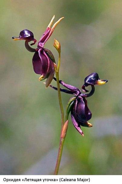 Цветы удивительной формы.