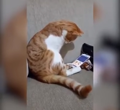 Кот увидел на экране видео с погибшим хозяином: трогательное видео
