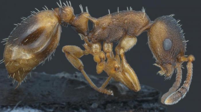 10 самых странных муравьев в…