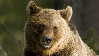 В Норильске возбудили уголовное дело о наезде тепловоза на медведя