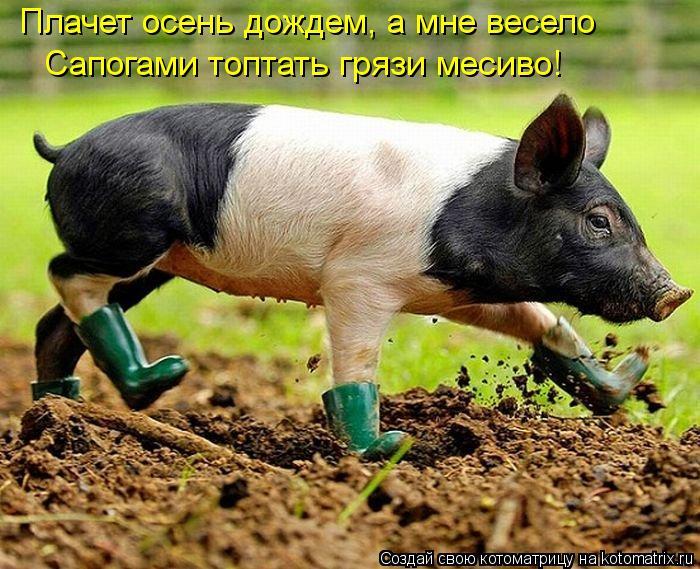 Котоматрица: Плачет осень дождем, а мне весело Сапогами топтать грязи месиво!