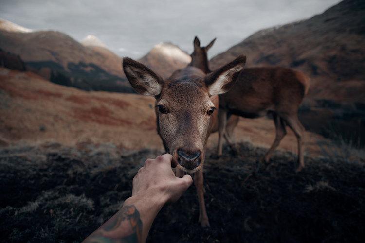 Суровая и прекрасная природа Шотландии