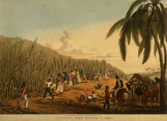 Уборка сахарного тростника (Антигуа, 1823 год)