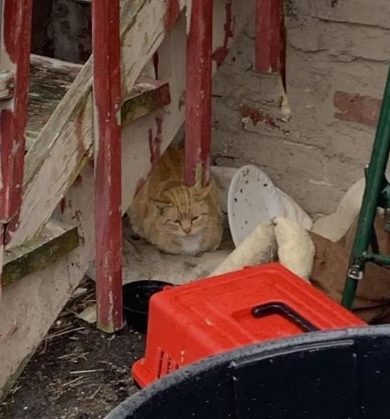 Теплый плед вместо холодного дождя — кошку и 5 крохотных котят забрали с улицы
