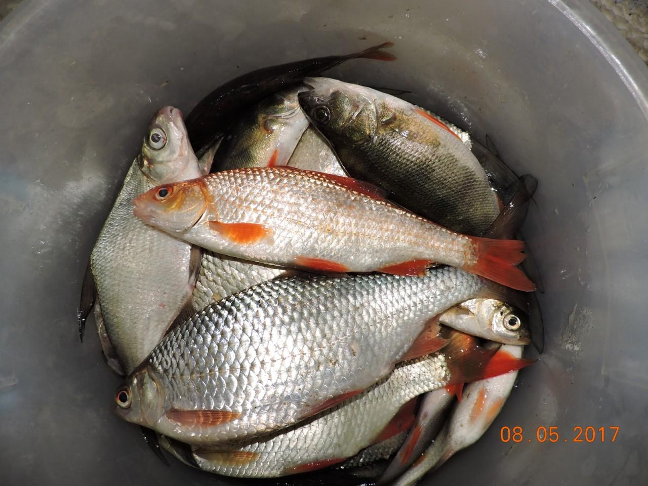 Поймал в реке золотую рыбку