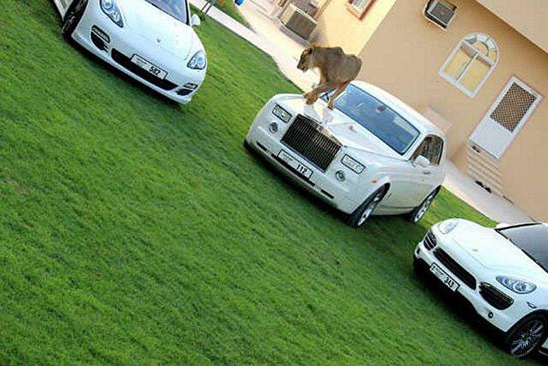 catsncars22 Хищные кошечки и дорогие машины: досуг арабского миллионера