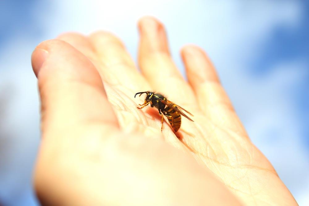 Как избежать укусов пчел иос?