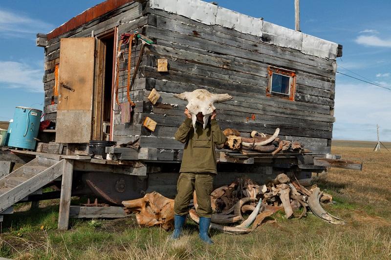 Добыча бивней мамонта в Сибири. Фото
