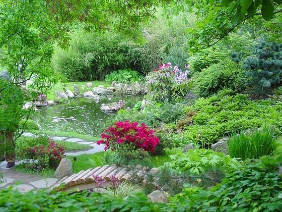 Вечнозеленые кусты и деревья