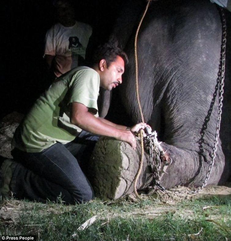 Radga03 Спасение слона, проведшего 50 лет в неволе, который плакал от счастья