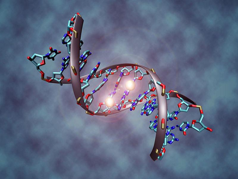 Израильские ученые создали атлас человеческого генома