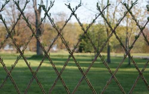 Плетение ограды из ивы