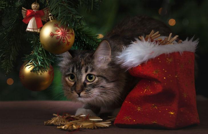 Из-за новогодней елки у кота случилось психическое расстройство